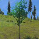 BroadleafSaplings.png